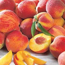 Gyümölcsfa vásárlás - Gyümölcsfa vásárlás.hu. Gyümölfák, bogyósok áruháza.